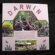 darwin_a.JPG