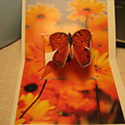 Butterflies_003.JPG