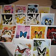 ButterflyCards.JPG