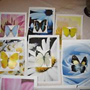 ButterflyCards3.JPG