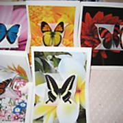 ButterflyCards4.JPG