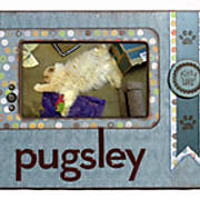 Pugsley-Frame-Web.jpg