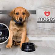 moses-bowl.jpg