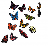 Stained Glass Butterflies Collection