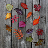 Falling Autumn Leaves Collection