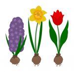 Life In Bloom: Spring Bulbs