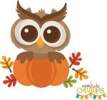 Fall Owl in Pumpkin